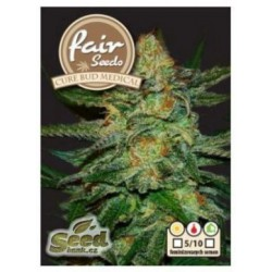 Cure BuD Medical Fair Seeds