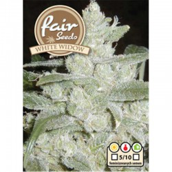 White Widow Fair Seeds