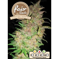 Auto Big Evil XXL Fair Seeds