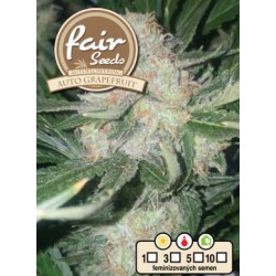 Auto Grapefruit Fair Seeds