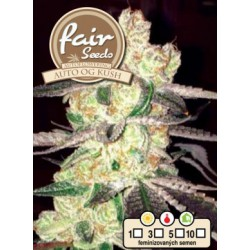Auto OG Kush Fair Seeds