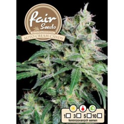 Auto Cream Candy Fair Seeds