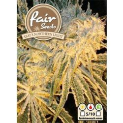 AK47 x Northern Light Fair Seeds