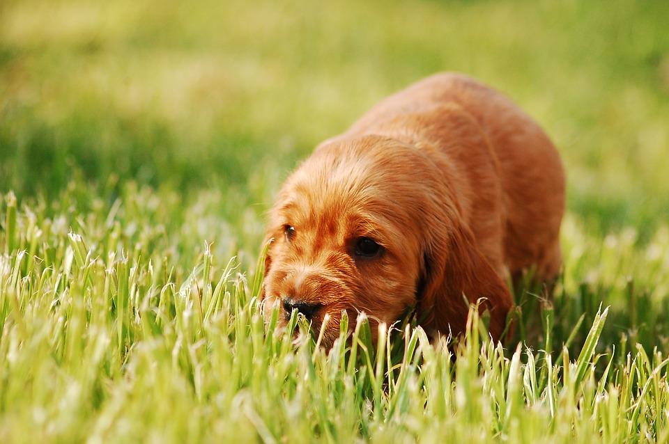 smena trávy pro kočky pěstování indoor